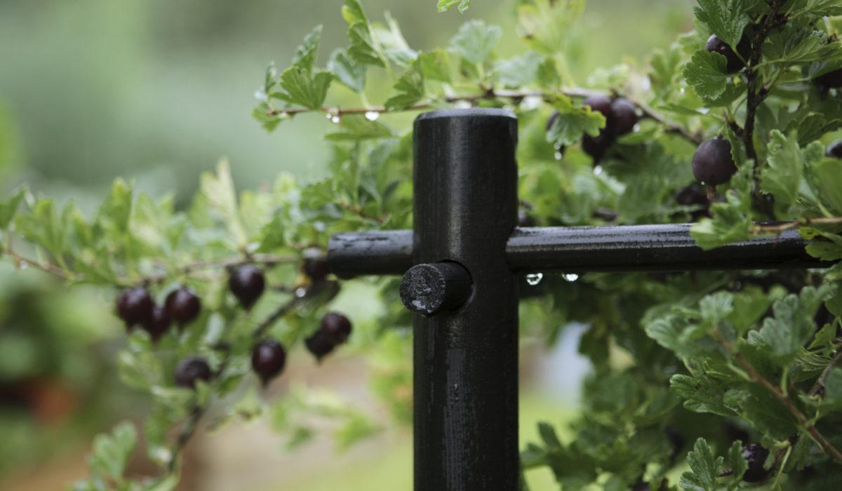 Ограждение ягодных кустарников - для выделения сортовых 38